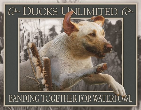 Ducks Unlimited - Banding Together For Waterfowl