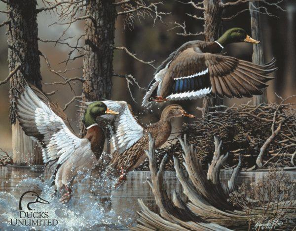 Ducks Unlimited - Beaver Pond