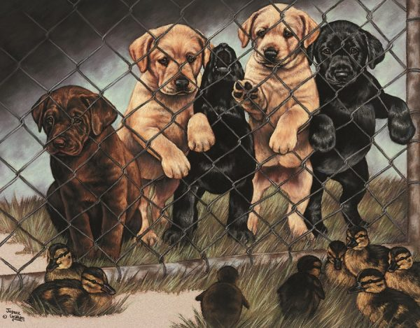 Jail Birds 5 - Puppies Behind Fence Looking At Baby Ducks