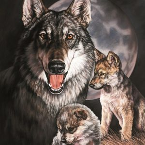 Wolf Experience (By Joanne Graham)